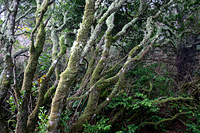 Gnarled, Mossy Trees