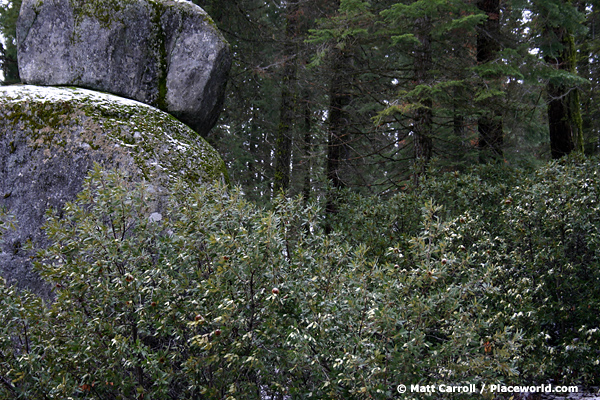 2 boulders in mountain forest