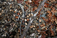 Leaf litter 2 - branches and red