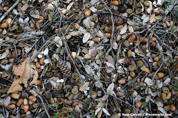 closeup of forest floor with acorns, twigs, and pine cones