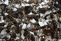 Leaf litter 4 - cones and granite
