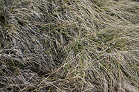 Mountain grass 1 - messy
