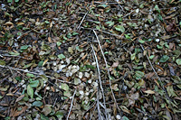 Leaf litter 7 - twigs and green