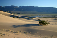 Sand Dunes Alongside Amargosa River